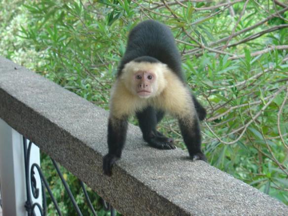 White-Face Monkey Surprise!