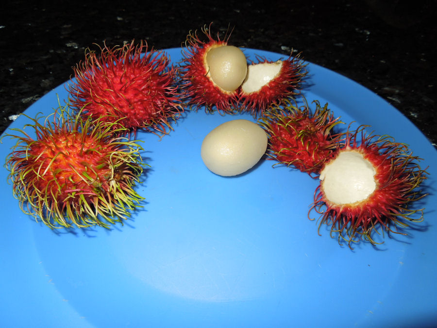 Red Fruit With Spikes http://dominicalproperty.wordpress.com/tag/organic-fruits/